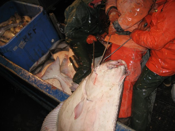 Pacific Halibut Fishing