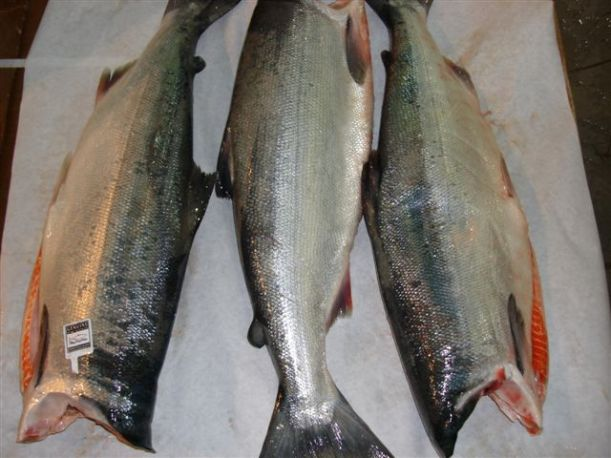 Copper River Sockeye Salmon H+G
