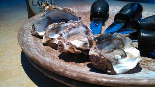 New Zealand Coromandel Bay Oysters