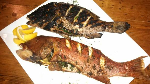 Huachinango Snapper and Baja Sheepshead