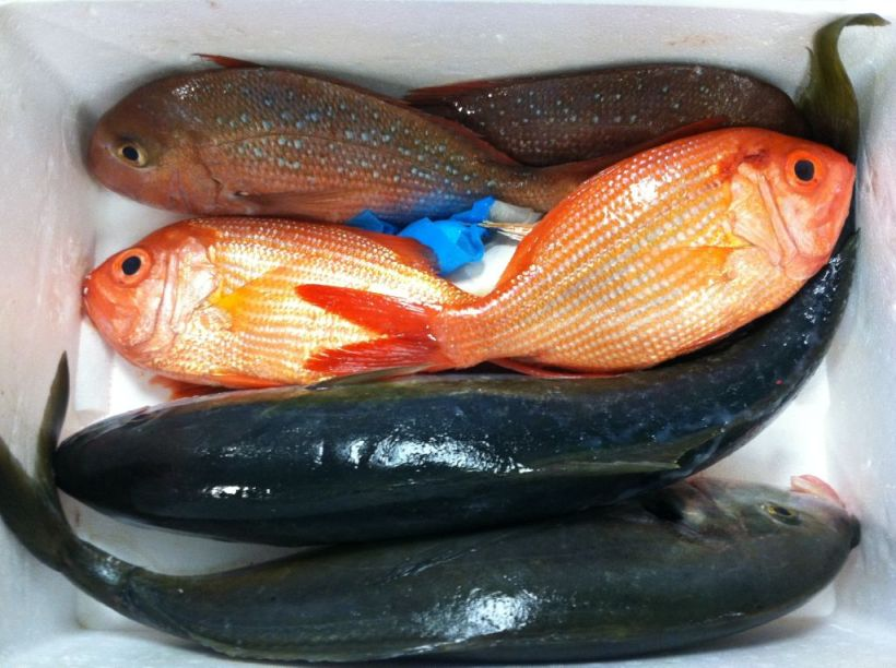 NZ Iki Jime - Tai Snapper, Red Snapper, Kingfish, Trevally