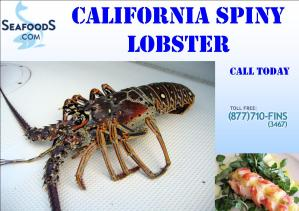 Lobster California Spiny Promo