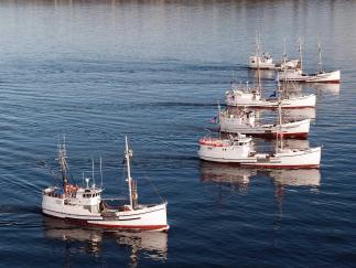 Boat Halibut Schooner
