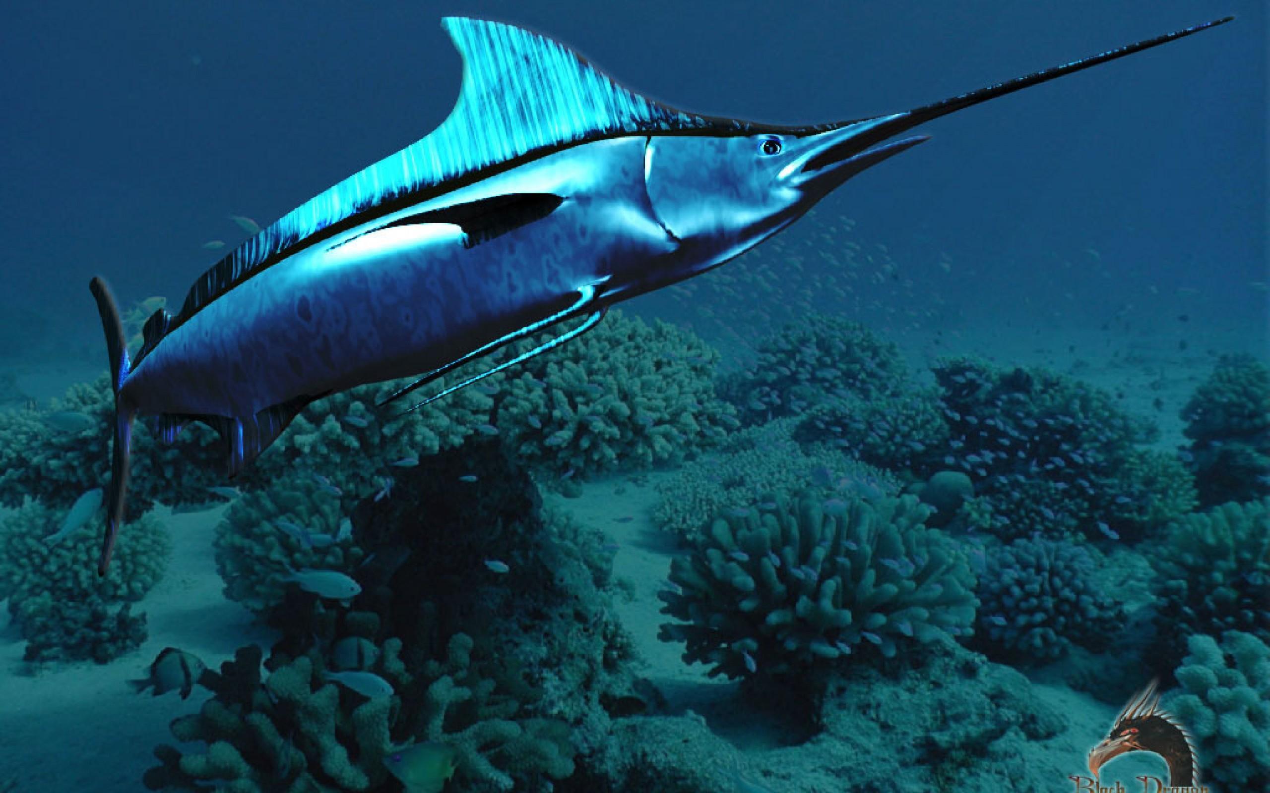 November | 2015 | TEAM SEAFOODS.COM BLOG Swordfish Underwater